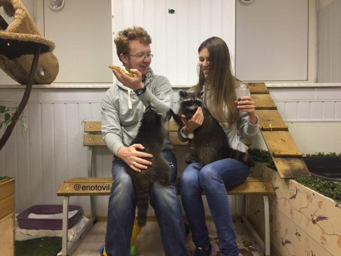 общение с енотами